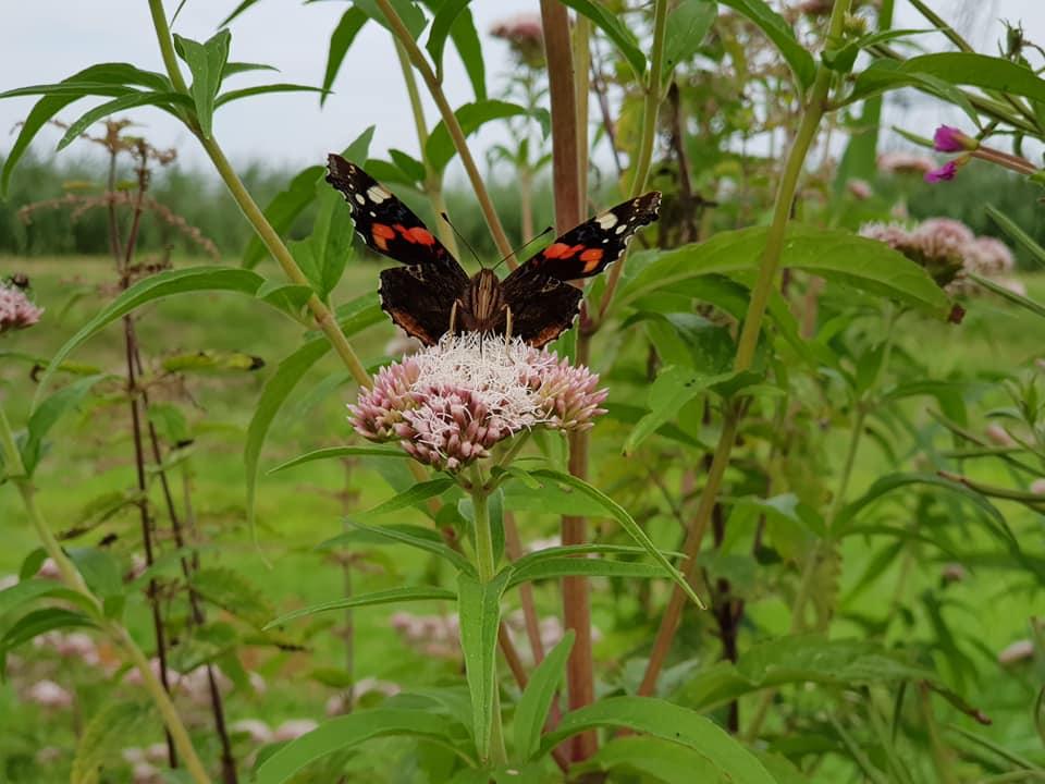 Foto vlinder polder